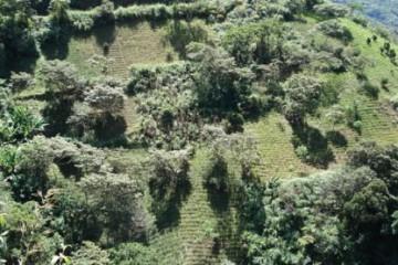 L'Unione-uropéenne-et-la-lutte-contre-le-trafic-de-drogue-avec-lAmérique-latine