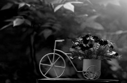 bicycle-with-flowers-images-wallpaper